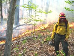 Fire research: Dr. Robert Kremens taking part in forest fire behavior research